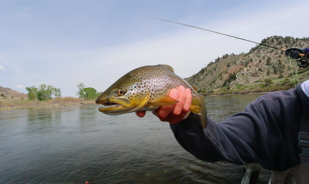 Missouri River Brown 1 5:15